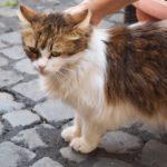 イタリア猫だらけ編